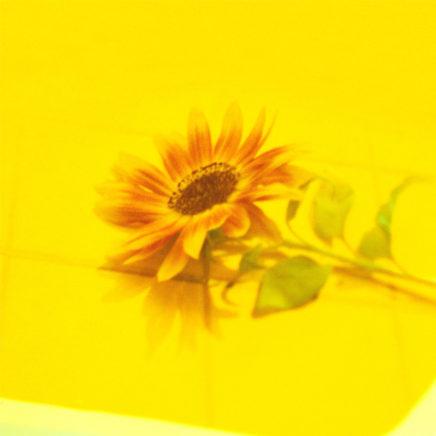 Vaundy – 花占い